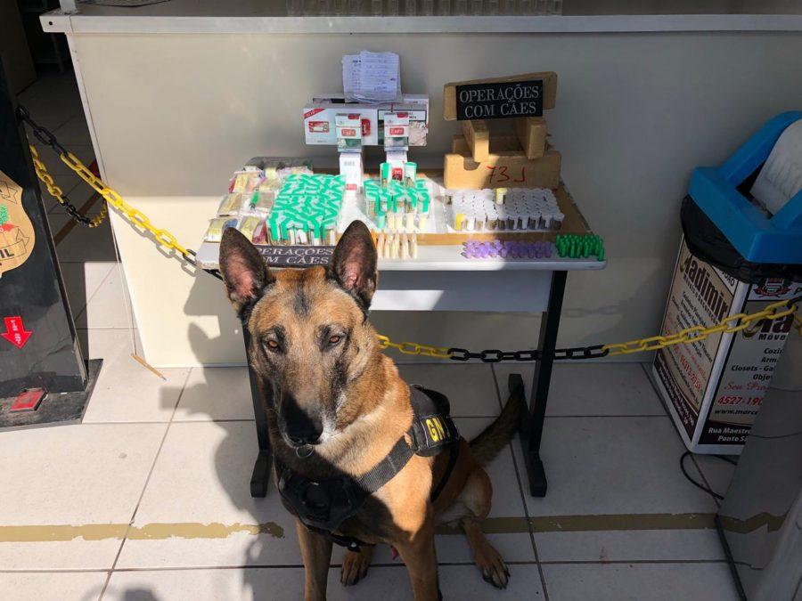 Canil da Guarda Municipal de Jundiaí apreende 4,5 kg de drogas no Jardim Califórnia